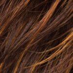 Hazelnut rooted